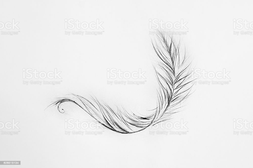 Sketch of light feather white background. stock photo