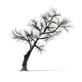 Fotografía De Dibujo De árbol De Invierno Sin Hojas Sobre Fondo