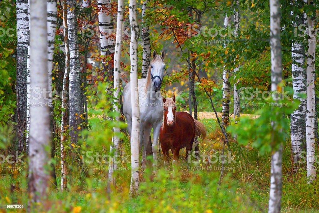 Skewbald horse and pony. Autumn park. stock photo