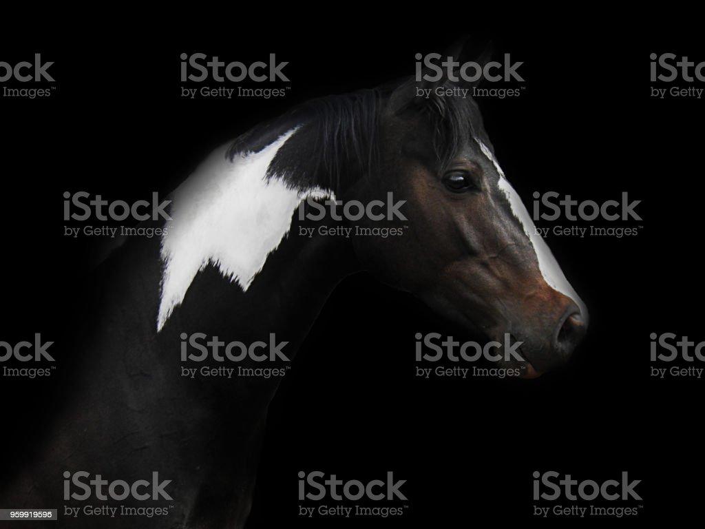 Atabanado caballos - foto de stock