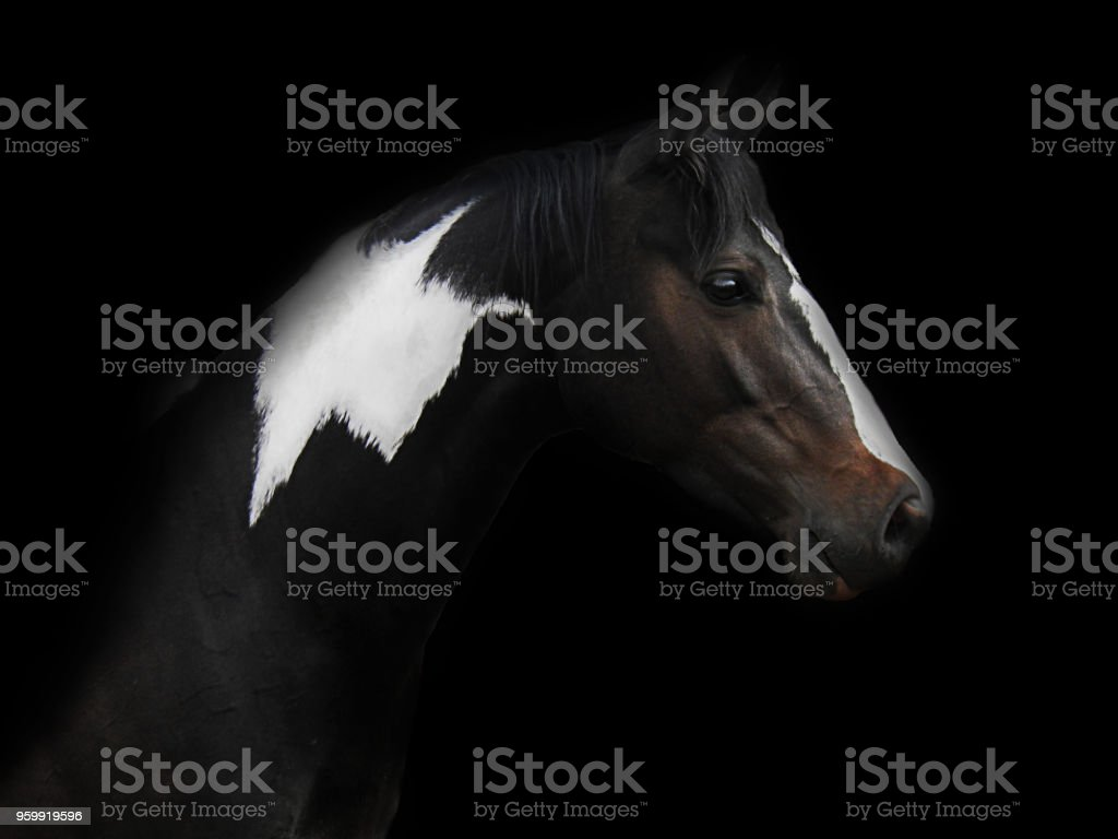 Skewbald Horse stock photo