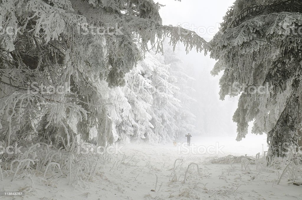 Ski athletes in the winter woods royalty-free stock photo