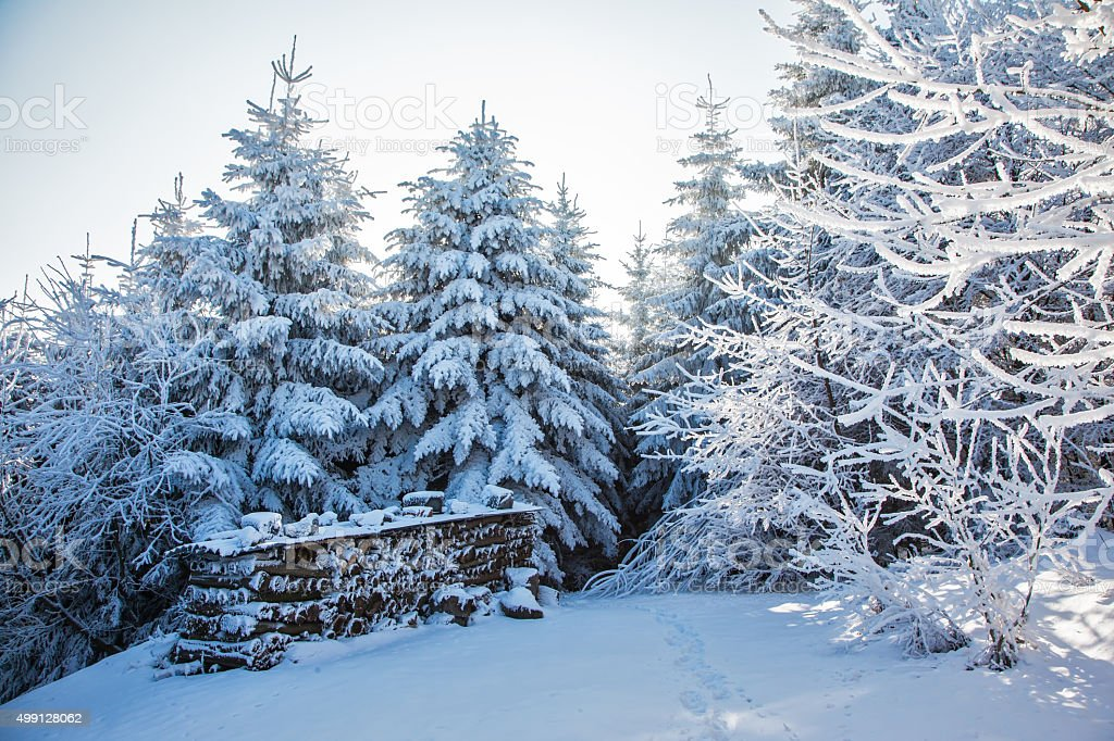 Ski glade in the snow-covered wood stock photo