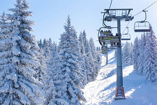 Ski resort, people on the lift among snowy white pine stock photo