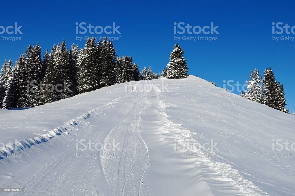 Ski slope and firs stock photo