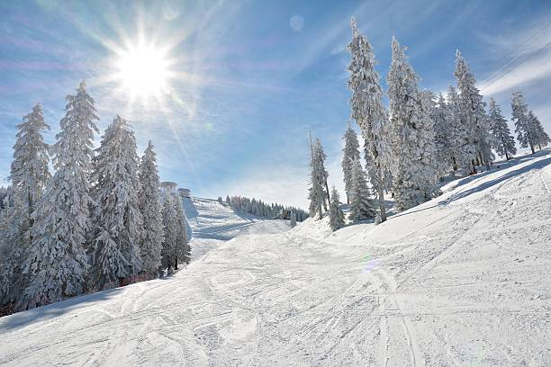 ski slope and snow covered trees - skidpist bildbanksfoton och bilder