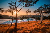 istock Ski slopes with tree at sunset in South Korea. 1219392851