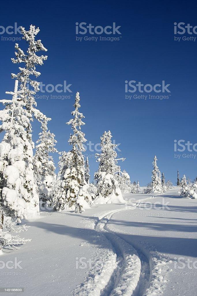 Ski tracks in fresh snow stock photo