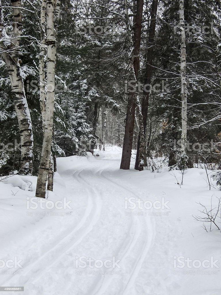 Ski tracks in snow, Orangeville, Dufferin County, Ontario, Canad royalty-free stock photo