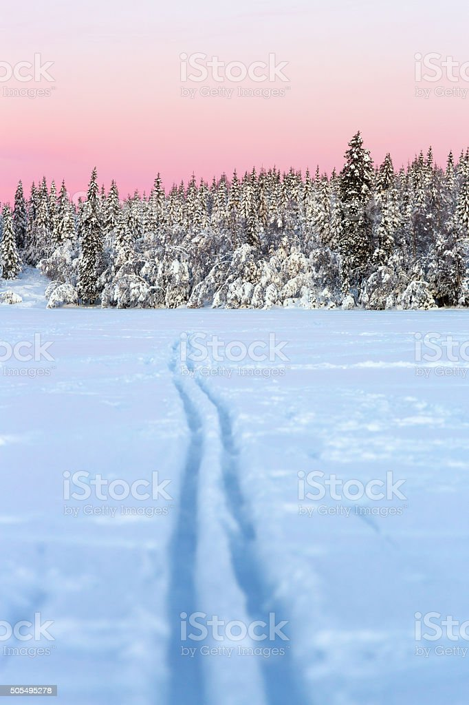 Ski tracks lead to the forest at sunset, Oslo Norway stock photo