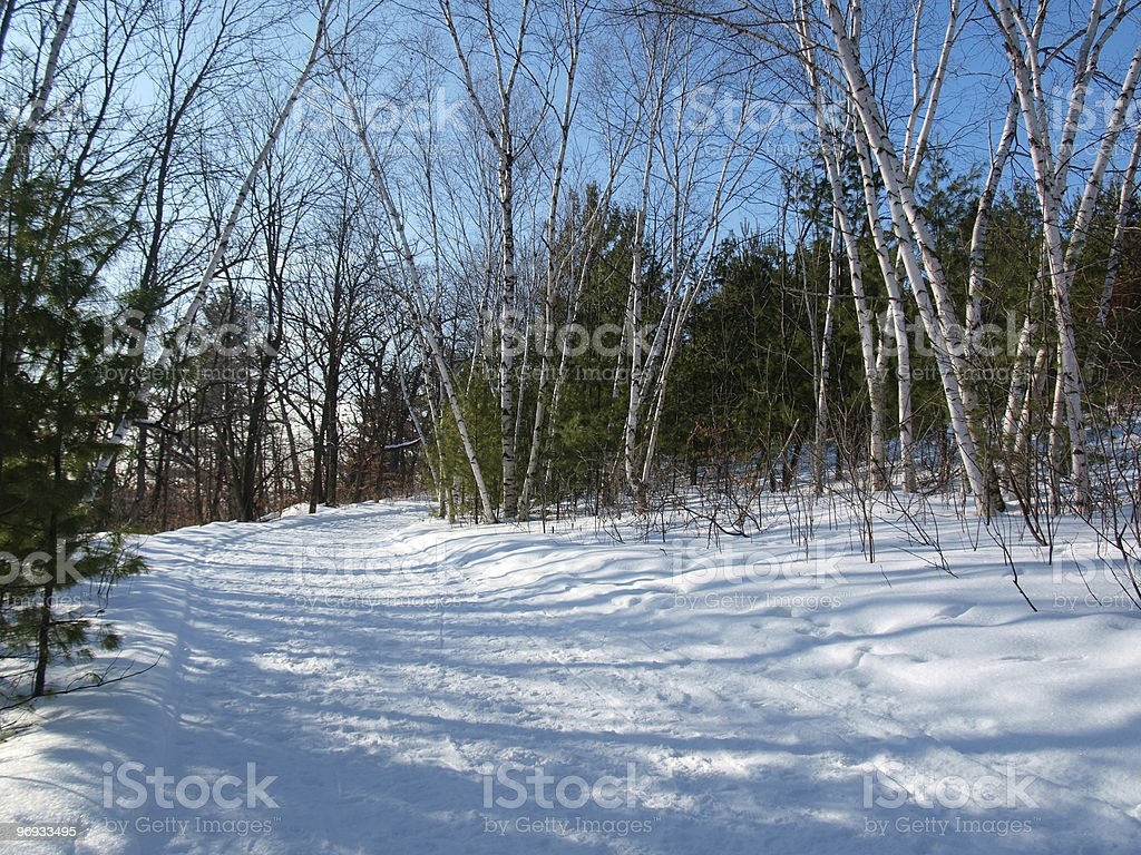 Ski Trail in the Woods royalty-free stock photo
