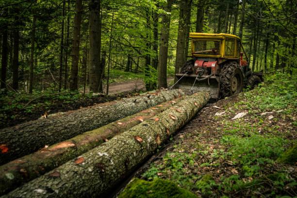 tronchi di trazione skidder - industria forestale foto e immagini stock