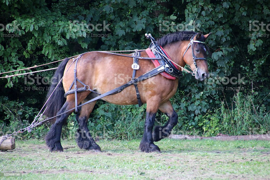 Skidding horse at work stock photo