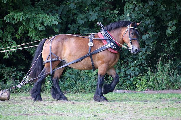 Ausrutschen Pferd bei der Arbeit – Foto
