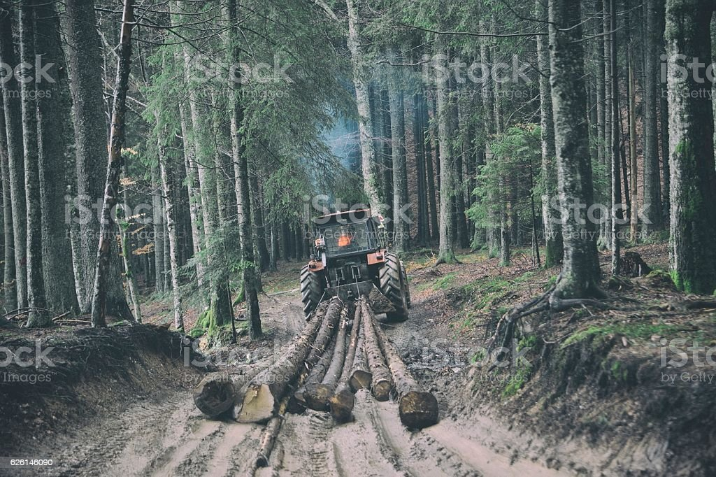 Skidding timber / Tractor stock photo