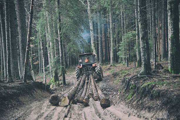 Skidding timber / Tractor Skidding timber / Tractor is skidding cut trees out of the forest. forester stock pictures, royalty-free photos & images
