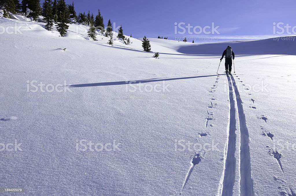 Skier Breaking Trail with Skin Track Ski Touring stock photo