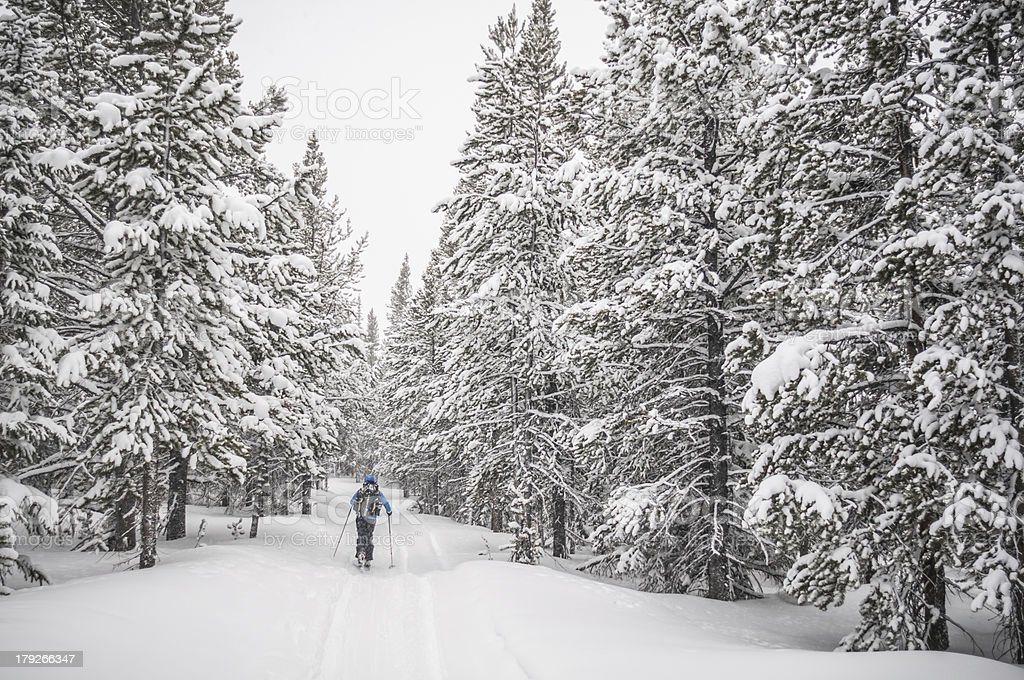 Skiing in the Winter royalty-free stock photo