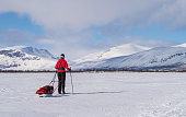 Female cross-country skier with sled (pulka) on the famous Kungsleden trail in Lapland. Sweden.
