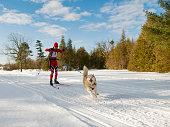 istock Skijoring Dog pulling skier sunny day in Ontario 152979042