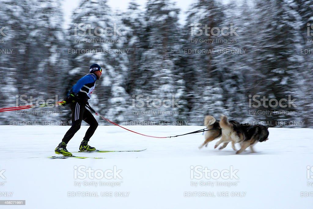 Skijoring in Russia. stock photo