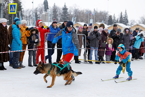 istock Skijoring in Russia. Volga Quest Sled dog race 2015 538479911