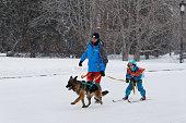 istock Skijoring in Russia. Volga Quest Sled dog race 2015 538479921