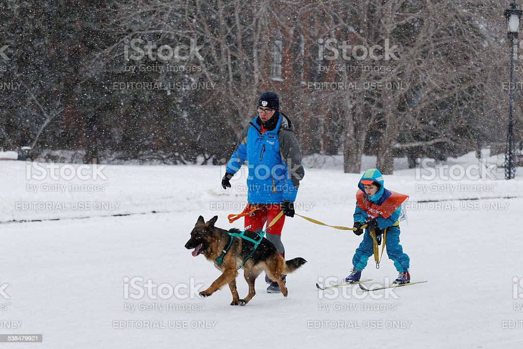 Skijoring in Russia. Volga Quest Sled dog race 2015 stock photo