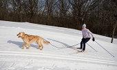 istock Skijoring 182708690