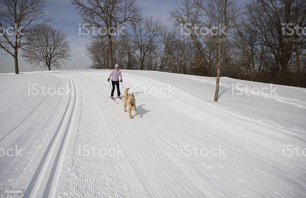 Skijoring stock photo