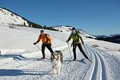 istock Skijoring 947548236