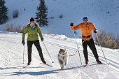 istock Skijoring 947564474