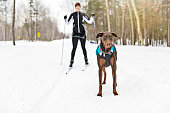 istock A skijoring woman have fun in forest 1078465664