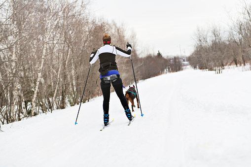 istock A skijoring woman have fun in forest 1078465688