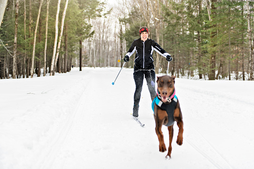 istock A skijoring woman have fun in forest 1078465692