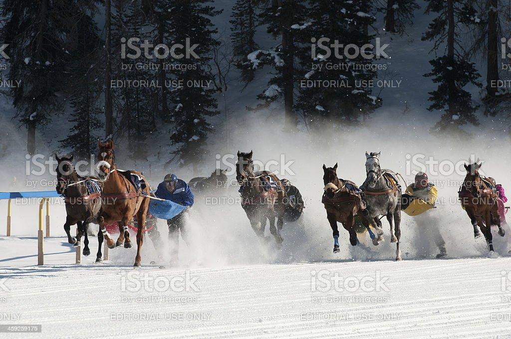 Skijöring stock photo