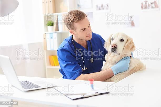 Skillful male vet is analyzing animal health picture id535427010?b=1&k=6&m=535427010&s=612x612&h=b sfe8zoz3uqq djbebwni6tl ejoupdqnusxwhj4ak=