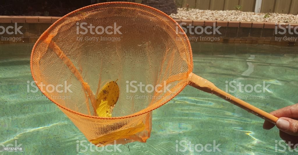 Skimming debris from swimming pool. - Royalty-free Adult Stock Photo