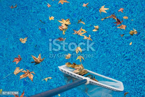 Skimming leaves from a swimming pool with a net on an Autumn day