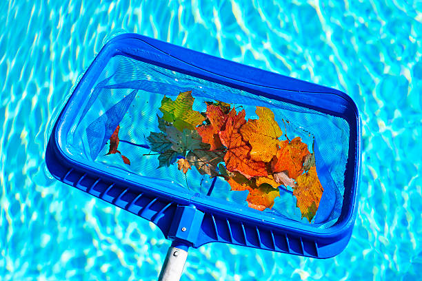 Skimming leaves from pool stock photo