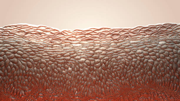 skin cells 3d living cells human skin stock pictures, royalty-free photos & images