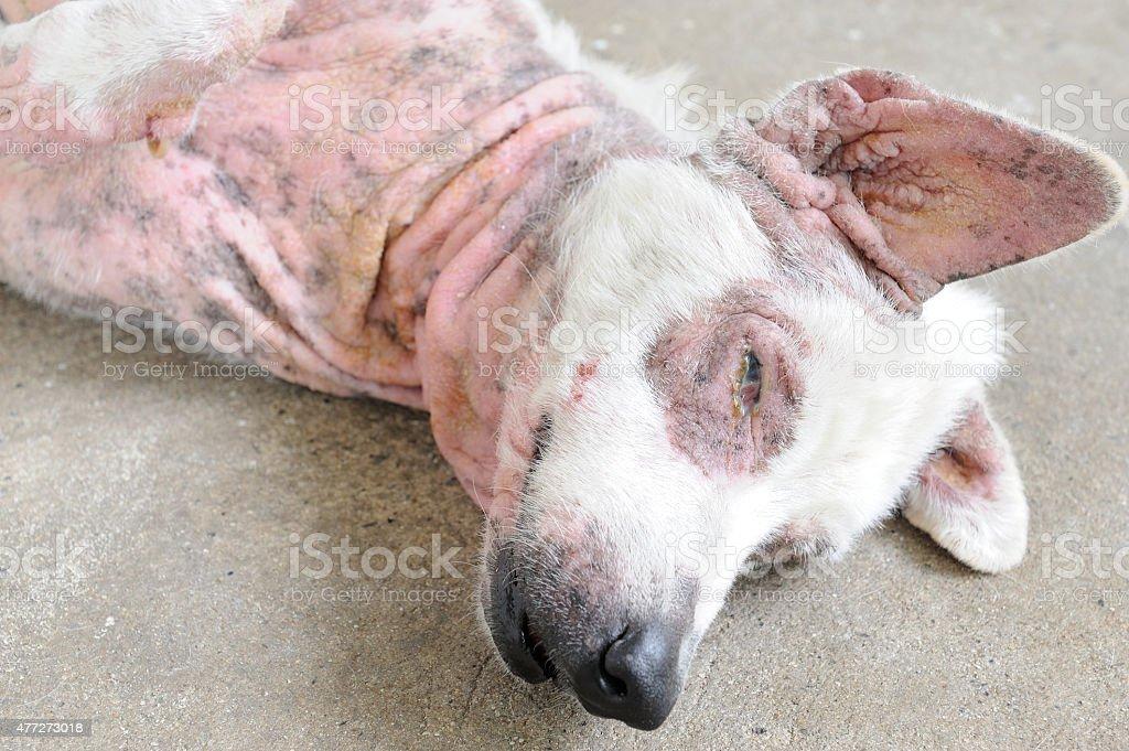 кожные заболевания в картинках