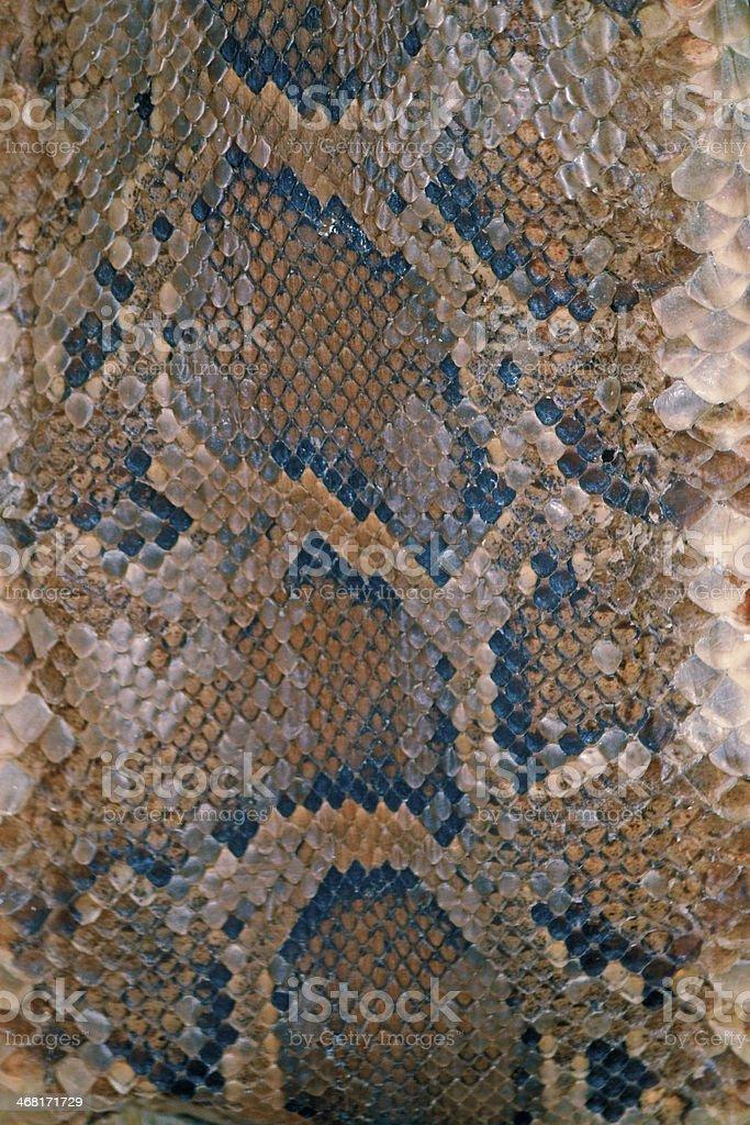Skin of Burmese Python stock photo