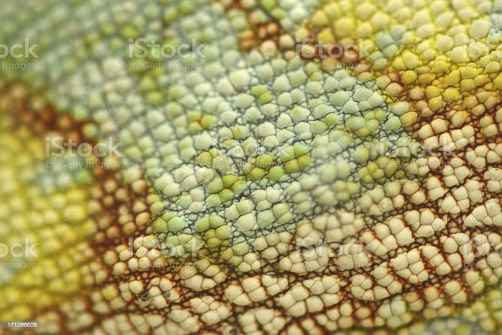 Skin of Chameleon lizards stock photo
