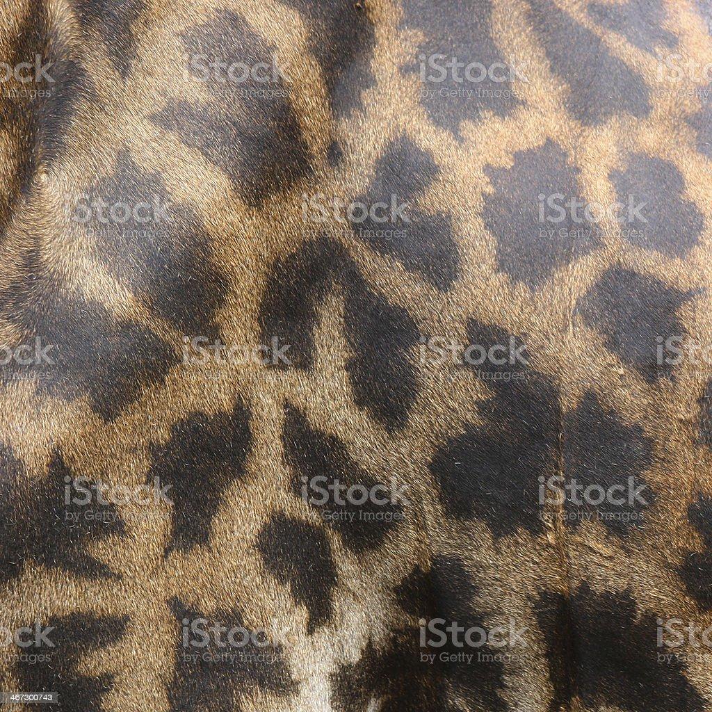 skin of giraffe royalty-free stock photo