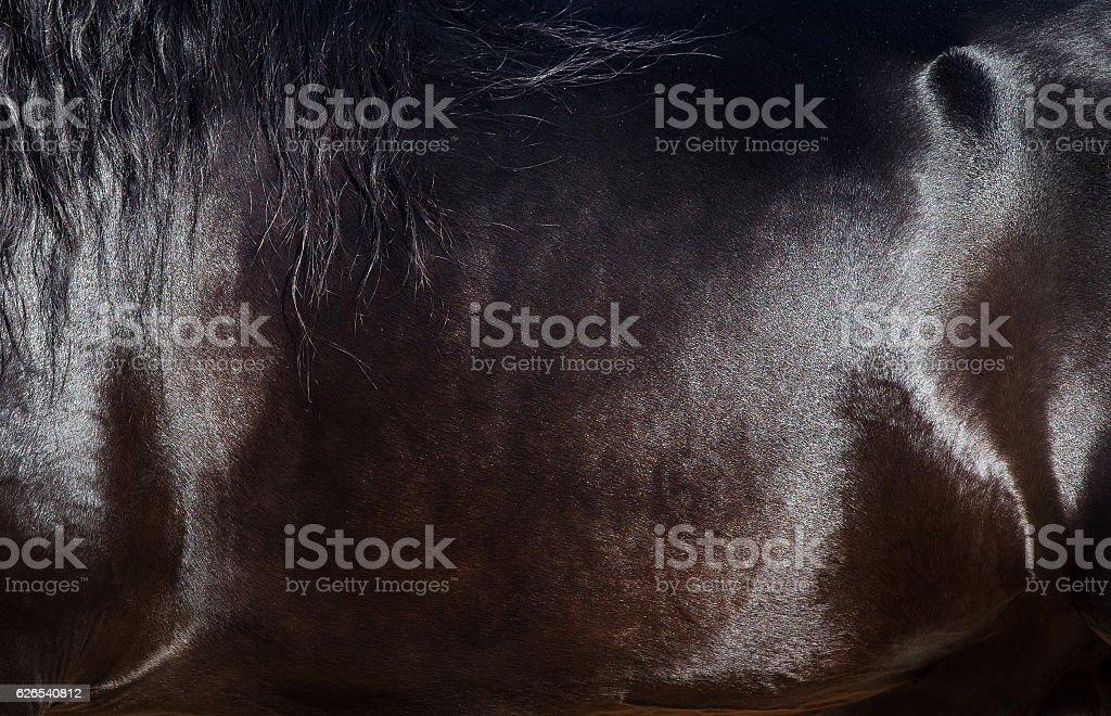 Skin of horse closeup. – zdjęcie