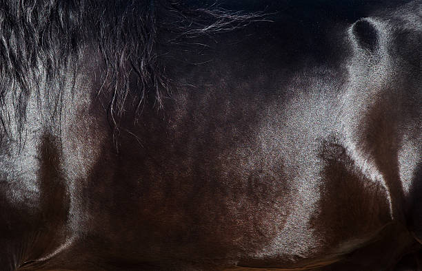 Skin of horse closeup. – Foto