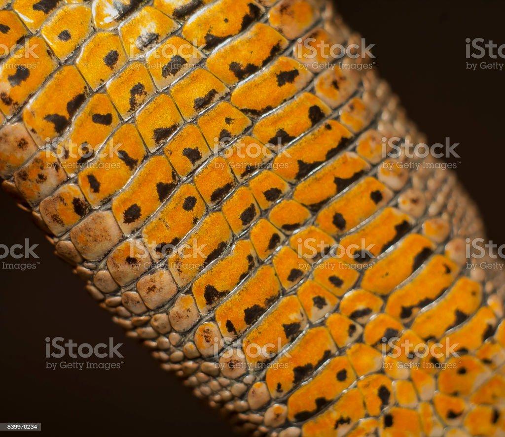 skin of lizard stock photo