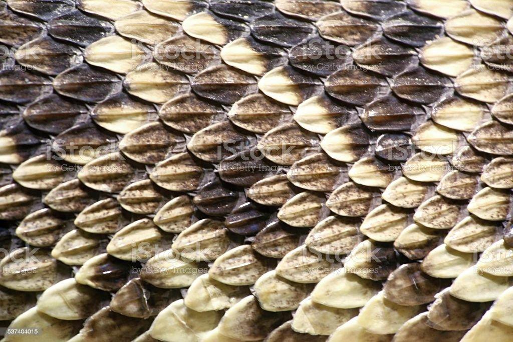 skin of the eastern diamondback rattlesnake stock photo