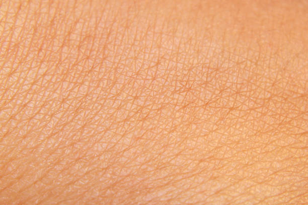 skin - human skin stock photos and pictures